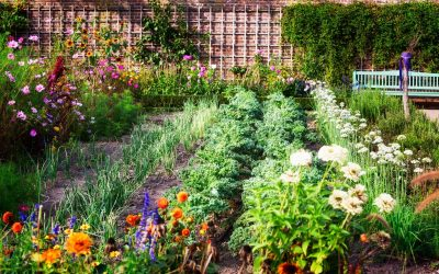 Uređenje vrta, bašte, dvorišta: planiranje i zasad